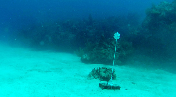 The latest reef deployment of the flow loggers